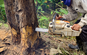 Closeup picture of our grounds worker cutting a tree with a chainsaw in Independence, MO