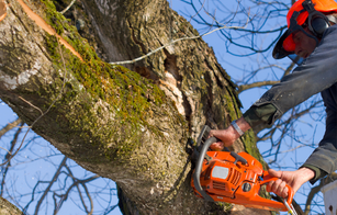 Close up picture of a tree climber cutting down a tree with a chainsaw in Independence, MO